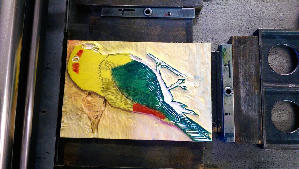 Black Fronted Parakeet