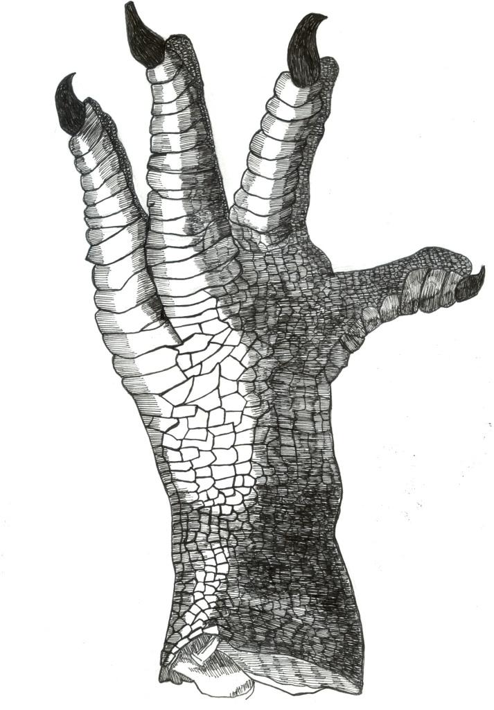 dodo foot